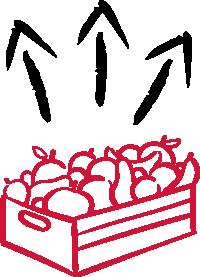 fruits en cagette